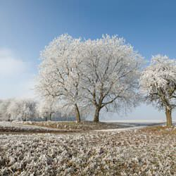 Frost covering trees and a grassy field in